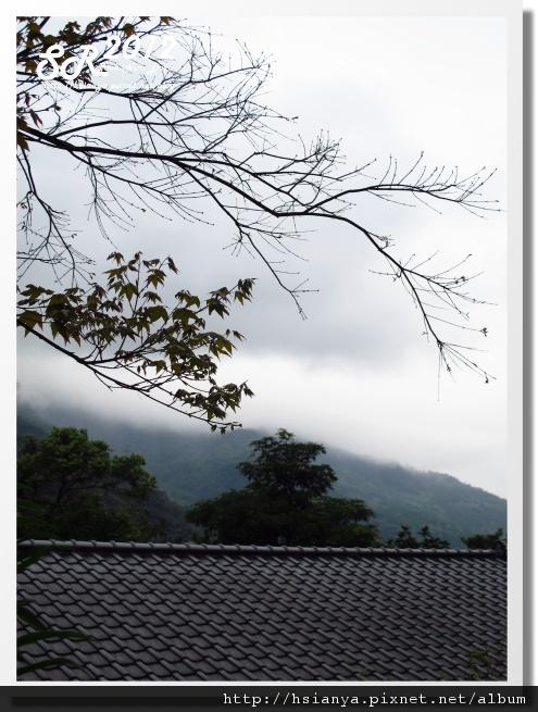 0310林田山 (18)