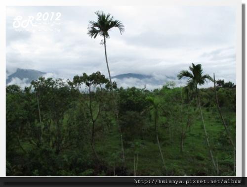 0312綠野森林 (15)