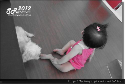 201205小隻 (8)