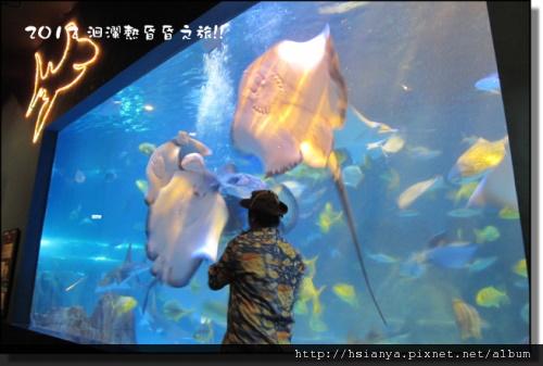 20120714海洋公園 (11)