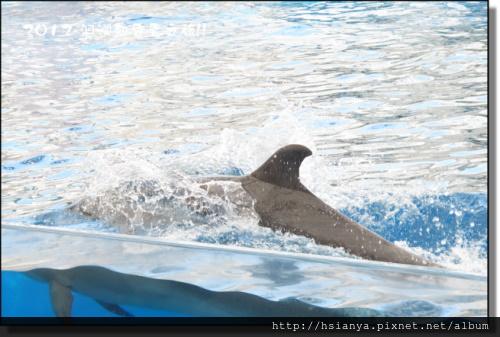 20120714海洋公園 (26)