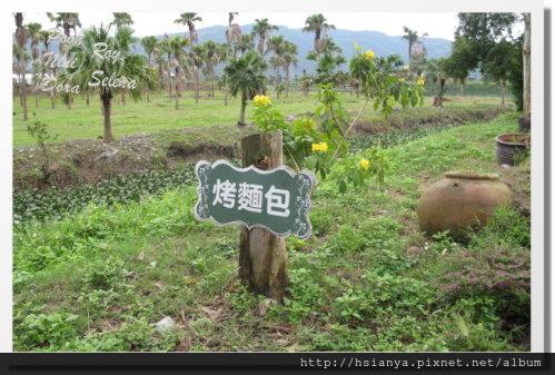 2013理想大地半日農夫(31)
