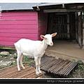 201405原野牧場 (16)