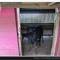 201405原野牧場 (18)