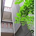 10312台北街頭 (8).JPG