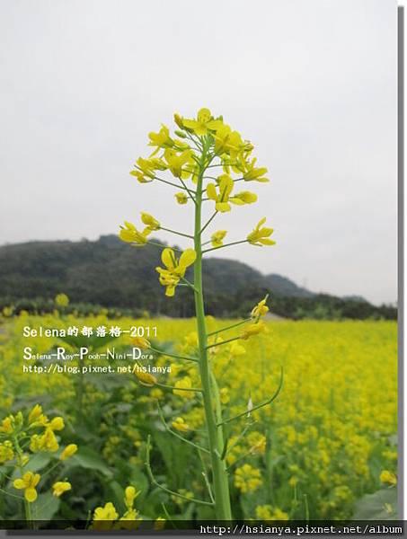 P0108紫南宮 (3).JPG