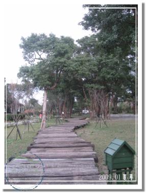 9801河岸森林 (24).jpg