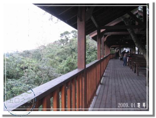 9801河岸森林 (28).jpg