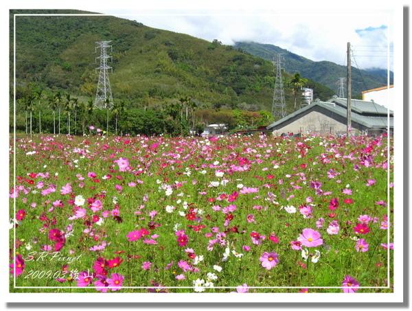 P980227-後山 (57).jpg