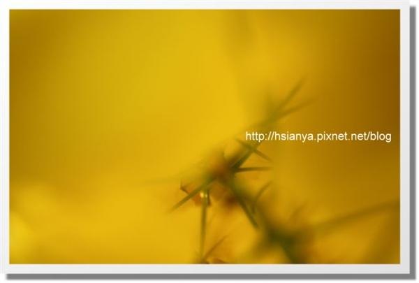 P980516 阿伯勒 (9).JPG