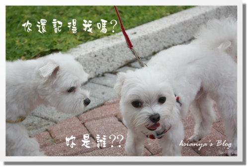 980919姊弟相見會 (5).JPG