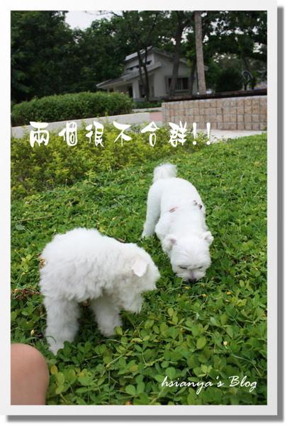 980919姊弟相見會 (10).JPG