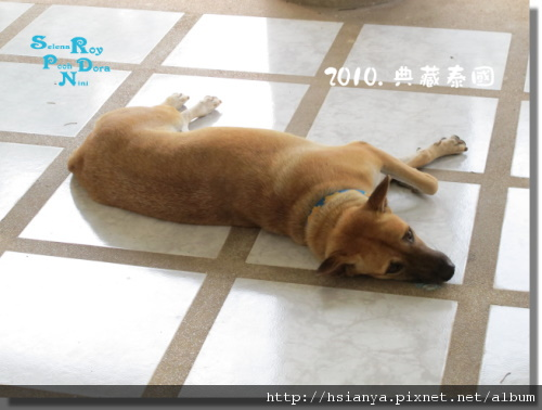 P991118-七珍佛山 (3)狗.JPG