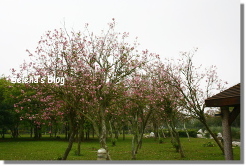 P990404台中都會公園 (15).JPG