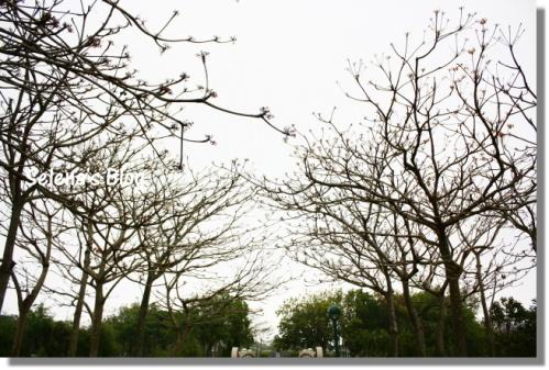P990404台中都會公園 (5).JPG