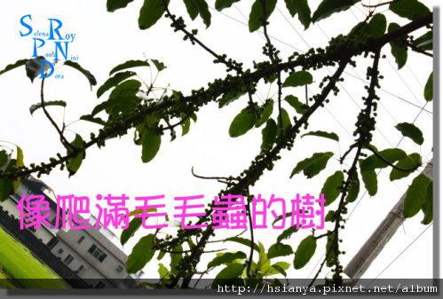990514冬山河騎腳踏車 (5).JPG