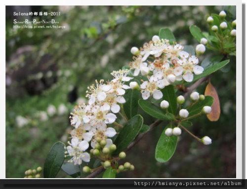 P0413-知本森林遊樂區 (16).JPG