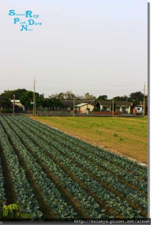 P991225板頭村-景 (11).JPG