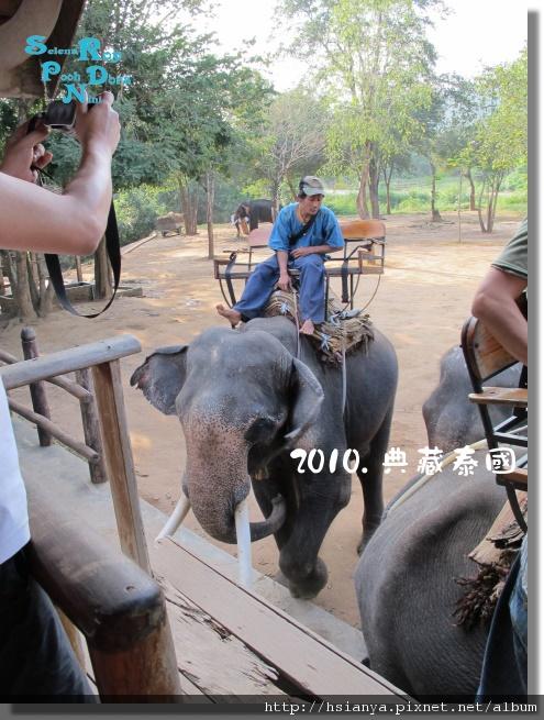 P991117-叢林騎大象 (2).jpg