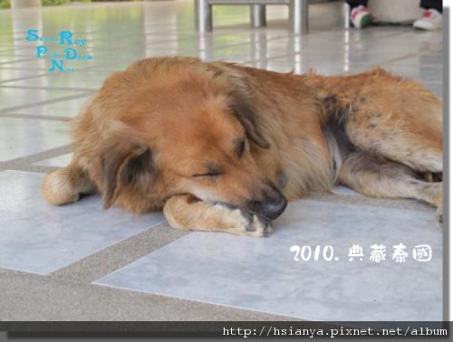 P991118-七珍佛山 (6)狗.JPG