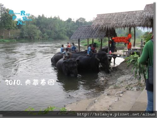 P991117-大象洗澡 (2).jpg