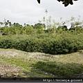 990516旺樹園休閒農場 (12).JPG