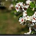 P0227卑南文化園區-- (6).jpg