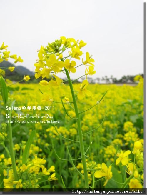 P0108紫南宮 (2).JPG