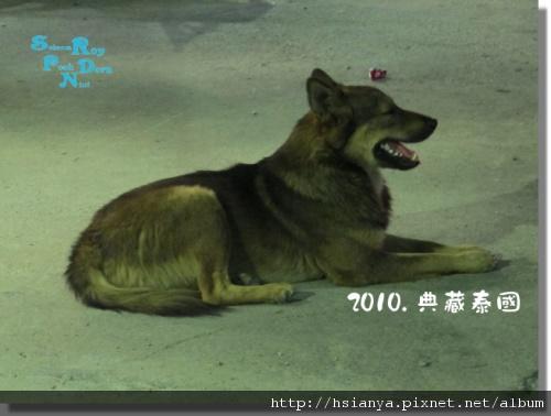 P991117-竹筏晚餐 -狗 (2).JPG