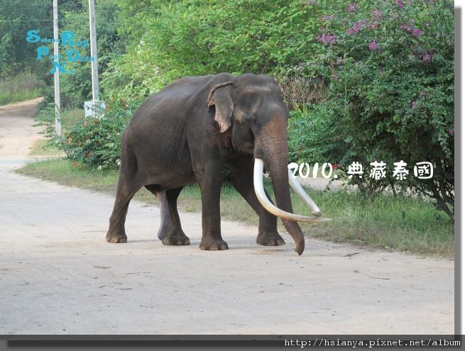 P991117-叢林騎大象 (8).JPG