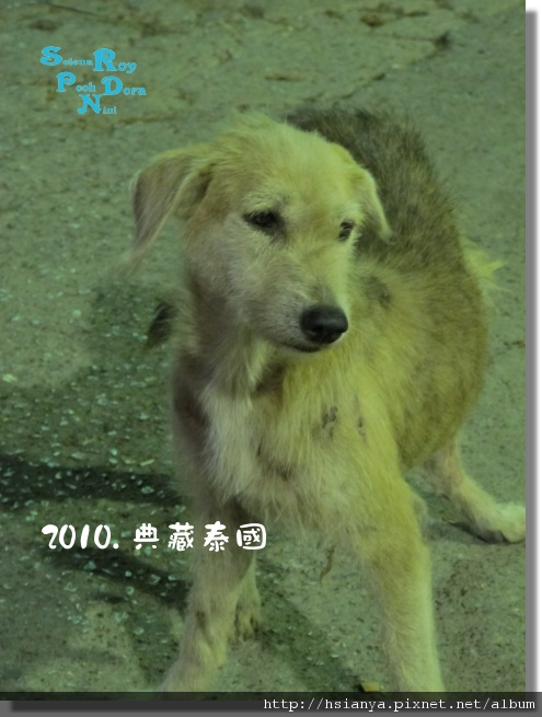 P991117-竹筏晚餐 -狗 (1).JPG