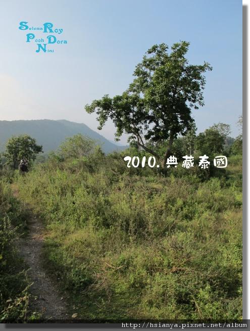 P991117-叢林騎大象 (5).jpg