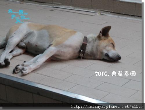 P991120-小狗 (1).JPG