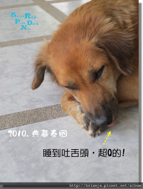 P991118-七珍佛山 (5)狗.JPG