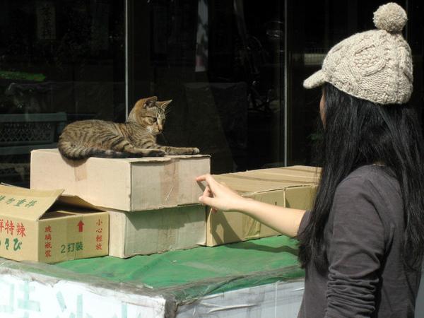 真想摸摸小貓,但又怕被臉被抓爛