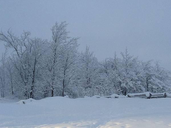 Collingwood的積雪