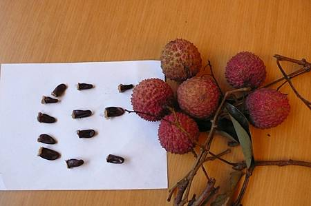 惠州荔枝與籽籽