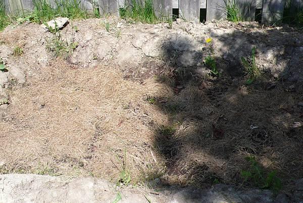 DSD的菜園蓋乾草