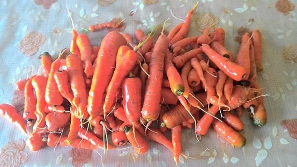 112條紅蘿蔔
