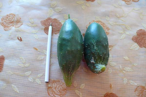 矮又肥的輕脆小黃瓜
