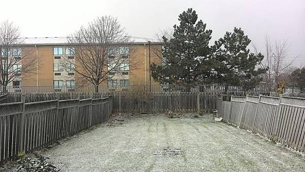 下雪的草地像覆蓋了糖霜.jpg