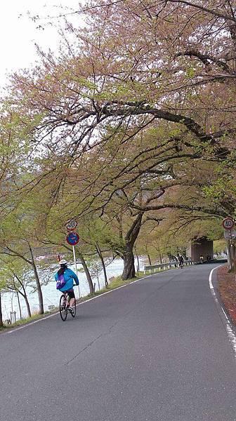 環湖櫻花樹下騎車.jpg