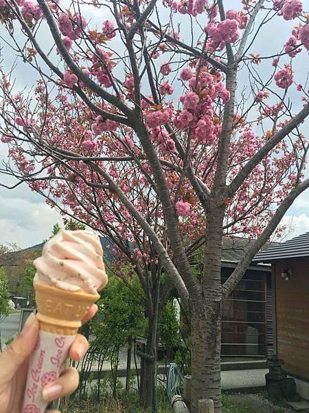 櫻花樹下櫻花霜淇淋.jpg