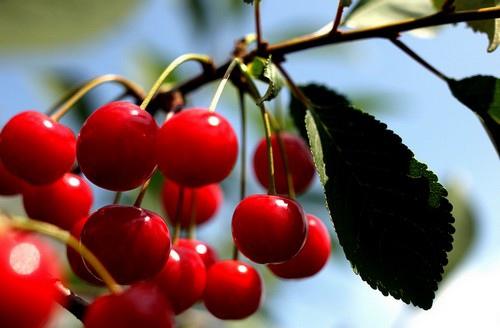 抗氧化水果