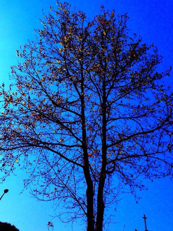 種植在心中的樹