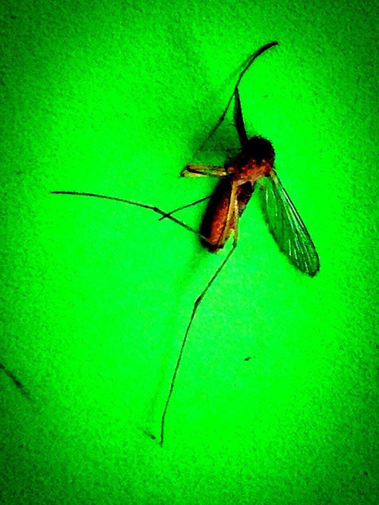外星蚊蚊來訪