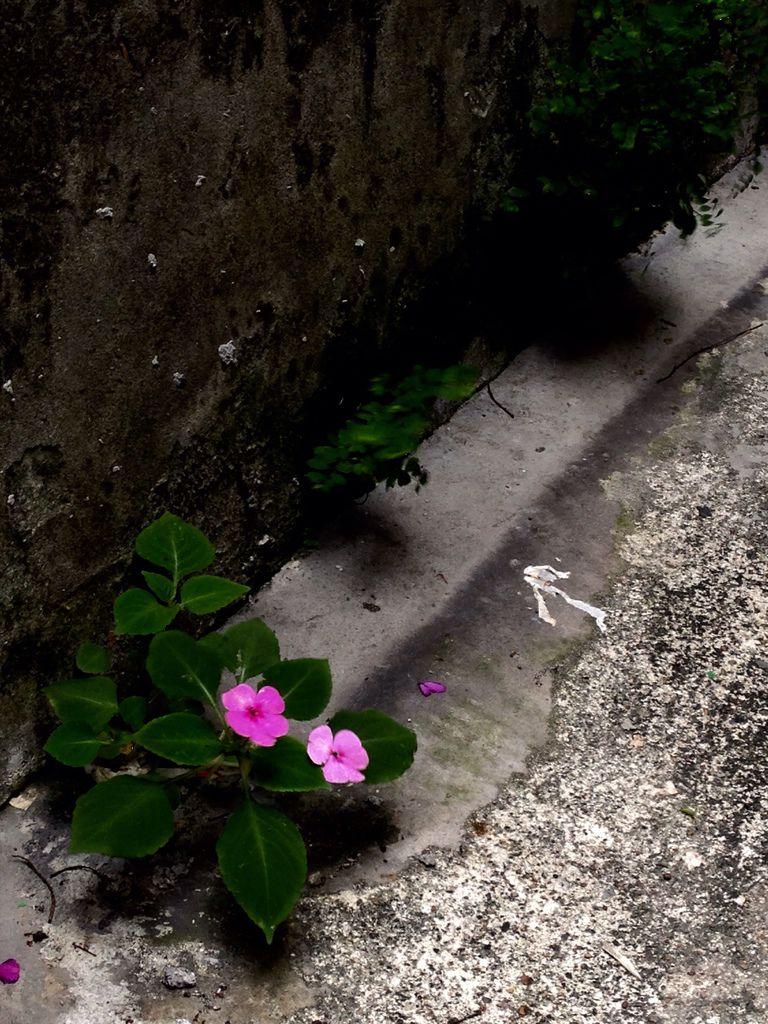 邂逅無名花