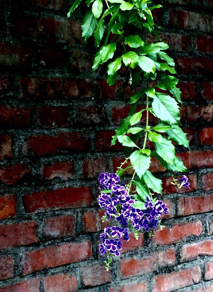 那串紫花的啟示