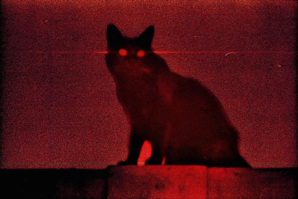 外星貓000033A.jpg