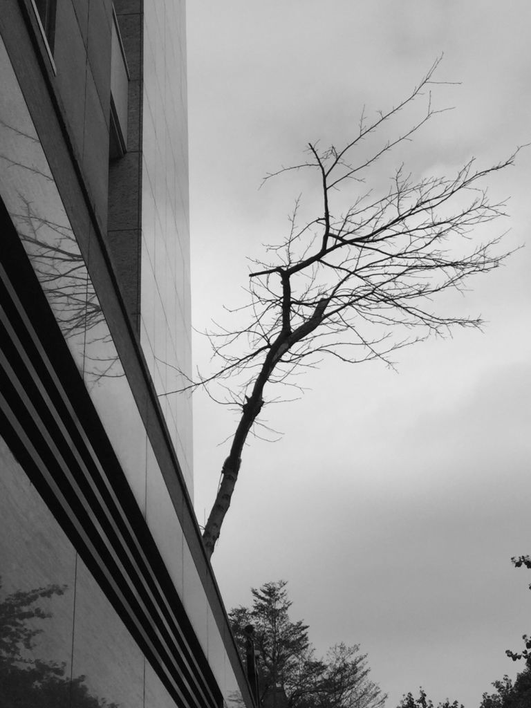 住在豪宅的樹.jpg